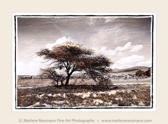 Fine Art Landscape Photography - Marlene Neumann