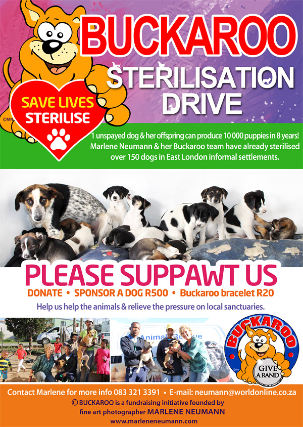 buckaroo-charity-dog-sterilisation-drive